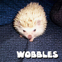 wobbles!
